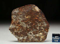 NWA 8355 (14.59 gram)