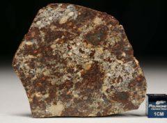 NWA 8355 (20.29 gram)