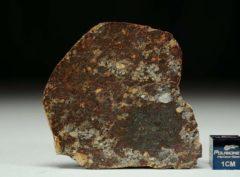 NWA 8355 (15.18 gram)