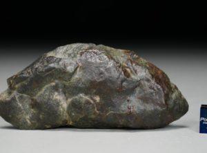 NWA 12804 (42.65 gram)