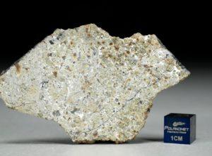 NWA 8321 (13.21 gram)