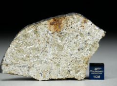 NWA 8321 (19.07 gram)