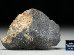 NWA 8321 (64.9 gram)
