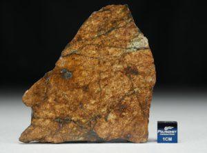 NWA 8757 (36.71 gram)