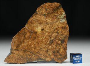 NWA 8757 (19.69 gram)