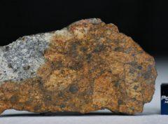 NWA 11388 (10.92 gram)