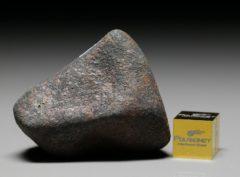 GAO-GUENIE (49.7 gram)