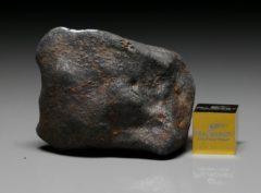 GAO-GUENIE (47.6 gram)