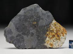 MC176 (32.81 gram)