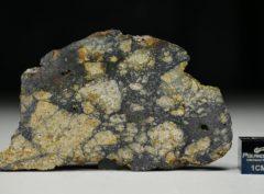 NWA 13166 (13.47 gram)
