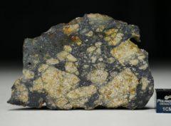 NWA 13166 (15.38 gram)