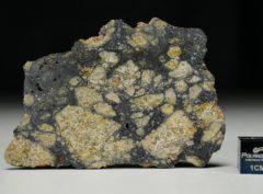 NWA 13166 (15.43 gram)