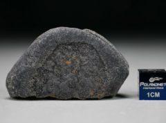 GAO-GUENIE Oriented (36.3 gram)