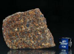 NWA 7172 (11.03 gram)