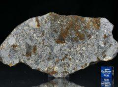 NWA 7168 (40.20 gram)