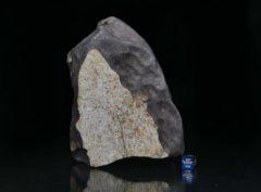 Zemaitkiemis (2328 gram)