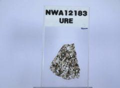 NWA 12183 Ureilite #2