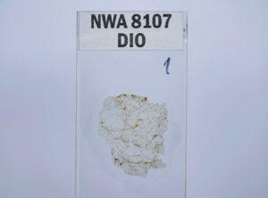 NWA 8107 Diogenite