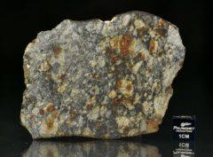 NWA 5495 (34.10 gram)