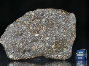 NWA 8305 (37.43 gram)