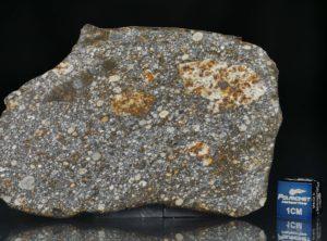 NWA 8305 (32.86 gram)