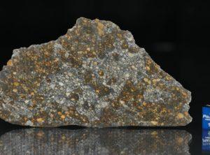 NWA 12263 (32.75 gram)