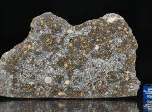 NWA 12263 (57.23 gram)