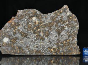 NWA 12263 (62.69 gram)