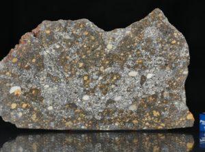 NWA 12263 (67.61 gram)