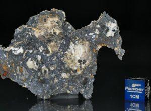 NWA 13278 (7.88 gram)