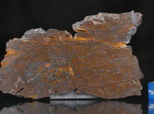 CANYON DIABLO SHALE (25.07 gram)