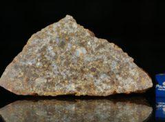 NWA 11386 (62.26 gram)