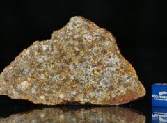 NWA 11386 (15.57 gram)
