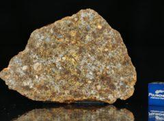 NWA 11386 (16.56 gram)