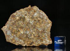 NWA 11386 (11.81 gram)