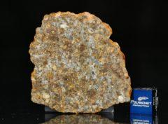 NWA 11386 (11.45 gram)
