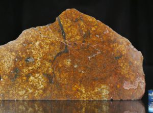SAHARA 99477 (189.90 gram)