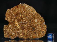 NWA 7158 (27.11 gram)