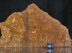 SAHARA 99477 (127 gram)