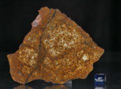 SAHARA 99477 (47.54 gram)
