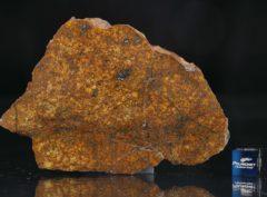 SAHARA 99477 (46.95 gram)