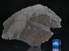 NWA 13267 (31.07 gram)