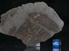 NWA 13267 (37.85 gram)