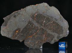 NWA 13267 (41.95 gram)