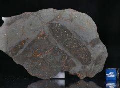 NWA 13267 (49.16 gram)
