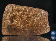 NWA 13165 (55.73 gram)