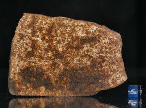 NWA 13165 (60.89 gram)