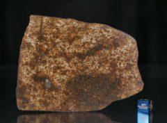 NWA 13165 (66.72 gram)