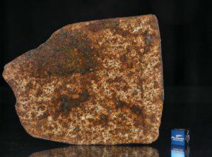 NWA 13165 (70.29 gram)
