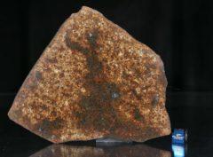 NWA 13165 (102.43 gram)